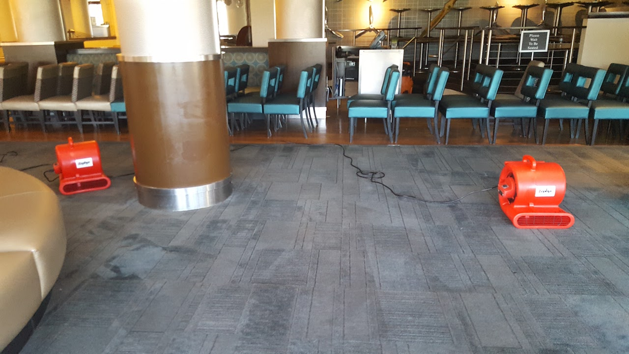 Green Carpet Cleaning Weston Fl Best Local Carpet